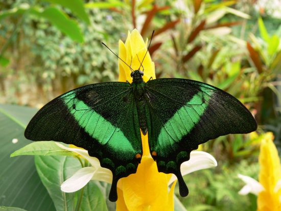 Butterfly Park Malaga