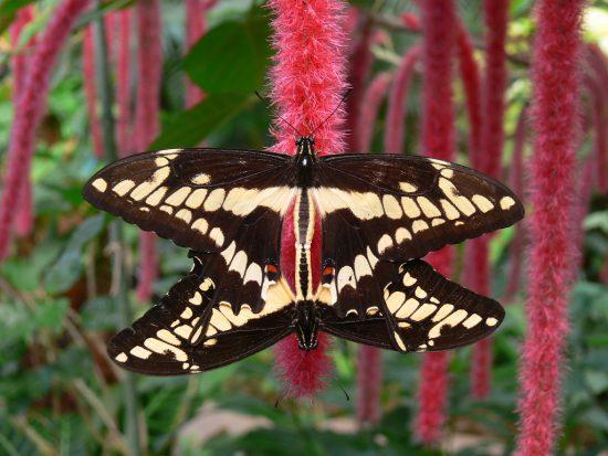Butterfly Park in Malaga