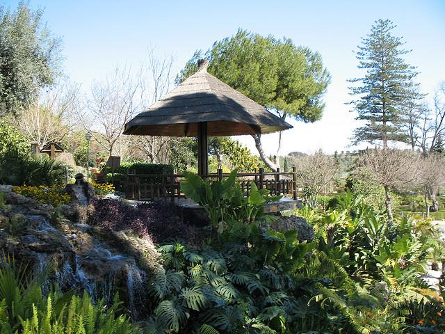 Visita al jard n bot nico molino de inca en torremolinos for Jardin botanico torremolinos
